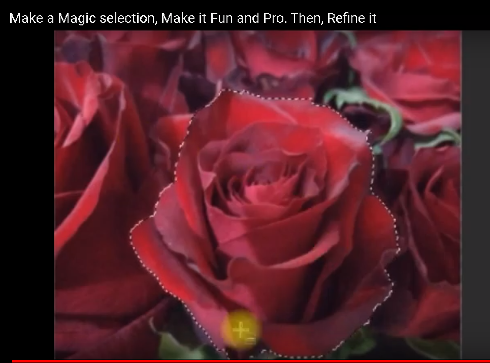 rose-selection