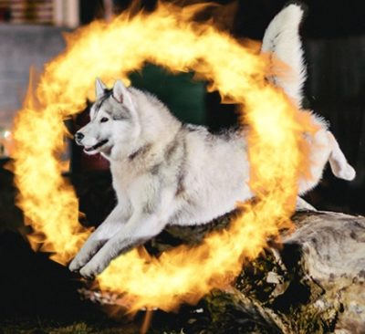 Dog without the fire reflection