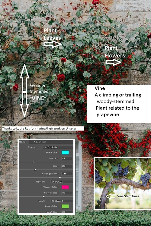 Vine parts vs Picture Frame Settings